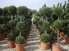 piante formate
