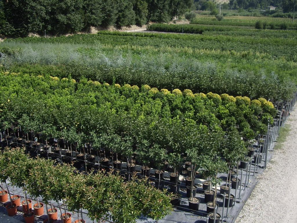 I vivai piante santori for Vivai piante